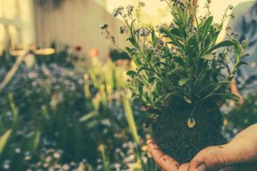 Planting Plans
